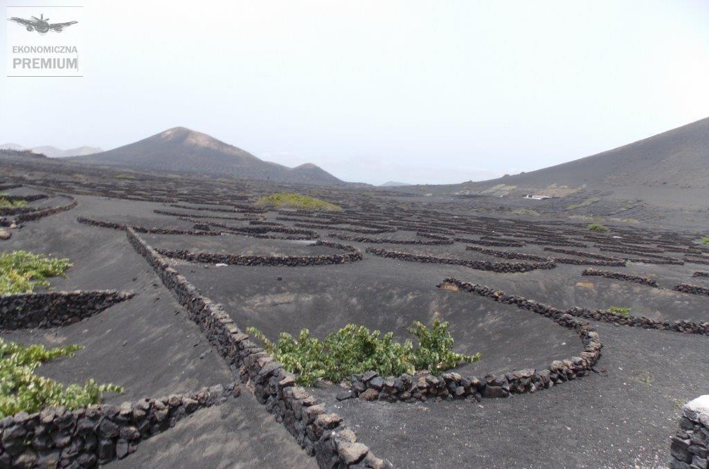 Rodzinne winnice zwinoroślami uprawianymi naczarnym wulkanicznym pumeksie